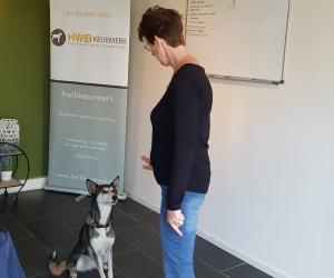 Hondengedragsdeskundige